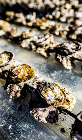 Les mailles coquillages et crustacés