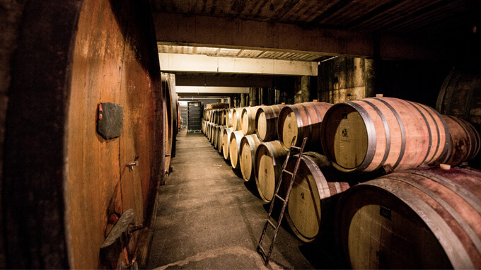 vigne vin et environnement