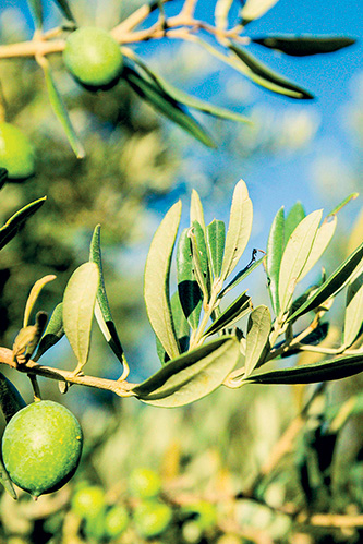 chassagnette plat olive camargues arles