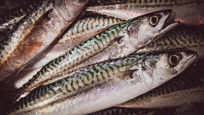 cote chic du poisson frais vendu en ligne