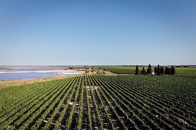 Vignoble du Domaine Royal de Jarras
